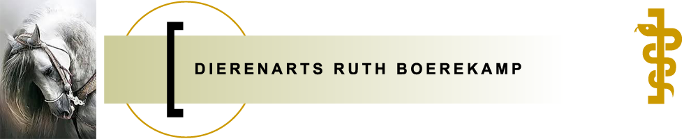 Dierenarts Ruth Boerekamp